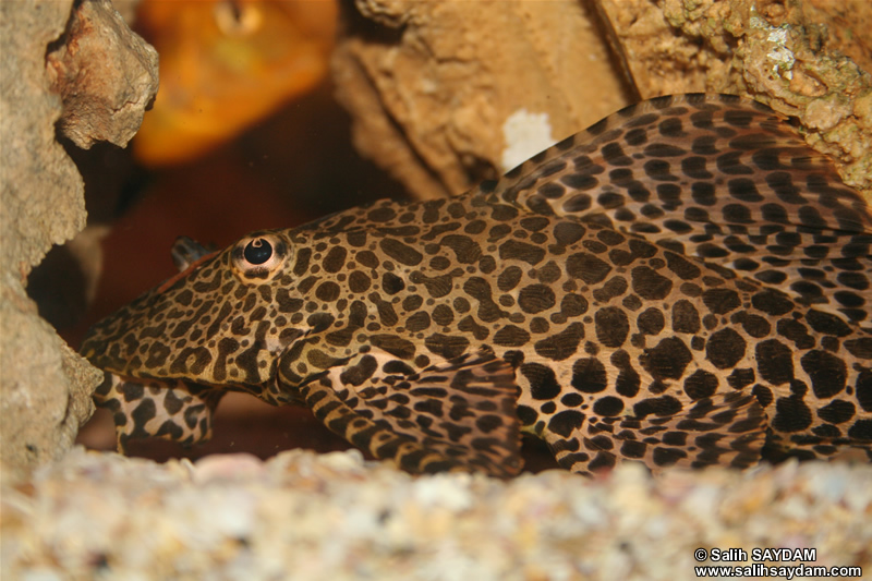 Pleco Photo Gallery 4