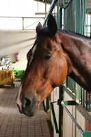 Horse Photo Gallery 4 (Ankara)