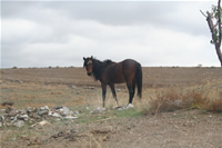 Horse Photo Gallery 2 (Ankara)