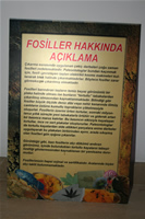 Fossil Descriptions Photo Gallery (Izmir, Cesme)