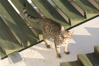Cat Photo Gallery 6 (Izmir, Cesme)