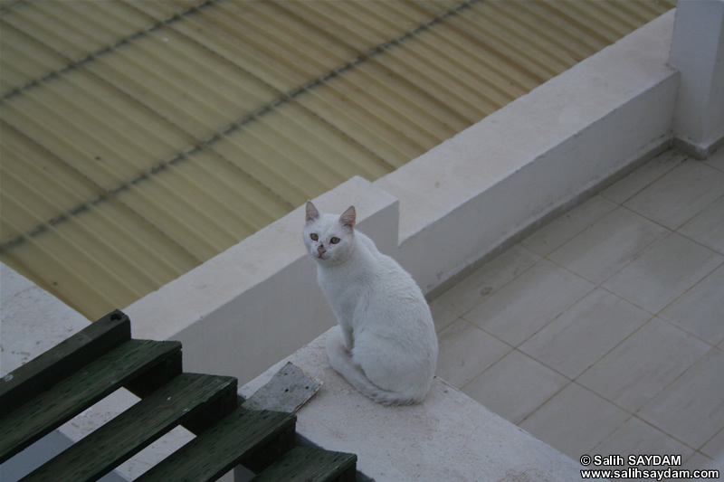 Cat Photo Gallery 7 (Izmir, Cesme)