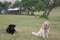 Dog Photo Gallery 3 (Sakarya)