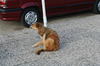 Dog Photo Gallery 5 (Izmir, Cesme)