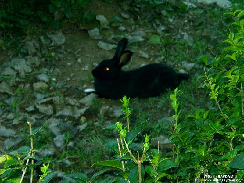 Rabbit Photo Gallery 1 (Antalya, Duden Fall)