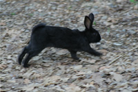 Rabbit Photo Gallery 4 (Ankara, Lake of Eymir)