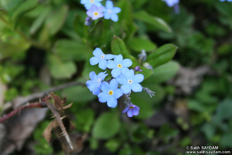 Trabzon Flower Photo Gallery 4 (Uzungol)