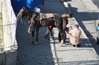 Horse Shoeing Photo Gallery (Erzurum)
